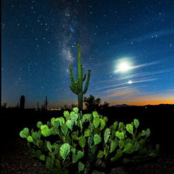 Sean Parker | Saguaro National Park