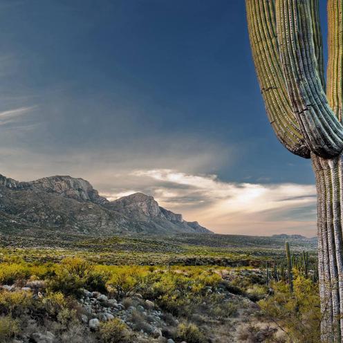 Sean Stuchen   Tucson