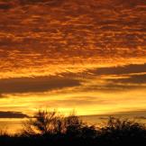 Terry Prowant | Fort McDowell Yavapai Nation