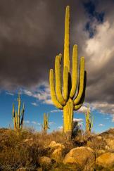 Thomas Barnwell | Tucson