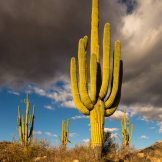Thomas Barnwell   Tucson