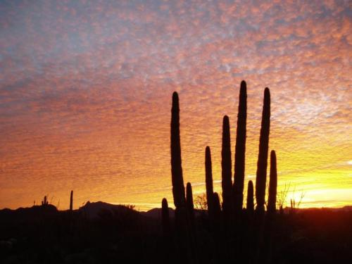 Organ Pipe Cactus National Monument, Southern Arizona | Courtesy of National Park Service