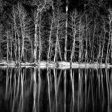 Alan Lucio | Willow Springs