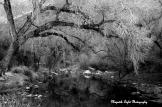 Amy Wood Pooler | Sabino Canyon