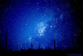 Jack Suman | Sonoran Desert