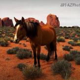 Jamie Thomas | Monument Valley