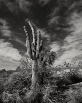 Jeff Stemshorn | Phoenix