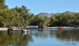 Lori Walker | Salt River