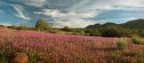 Rex Lavoie | Tonto National Monument