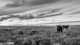 Sean Parker | Chino Valley