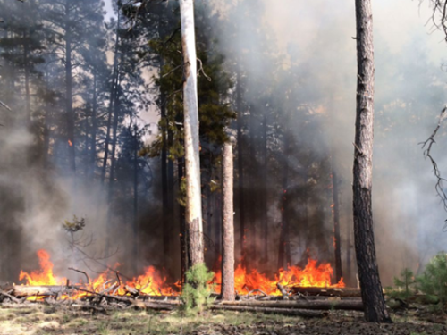 The Secret Fire burns near Flagstaff on Saturday. | Courtesy of U.S. Forest Service