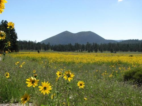 Sunset Crater Volcano National Monument, near Flagstaff | Courtesy of National Park Service