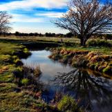 Alan Lucio | Silver Creek