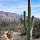 Cheryl Caffarella Wilson | Saguaro National Park East