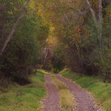 Dave Anderson | Bonita Creek