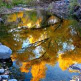 Debbie Filleman Detherage | Bonita Creek