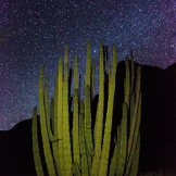 J.T. Dudrow | Organ Pipe Cactus National Monument