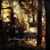 JoAnna DeLuna | Pinetop