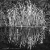 Keith Zimmerman | West Fork of Oak Creek
