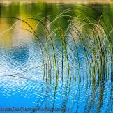 Ken Sanger | Lockett Meadow
