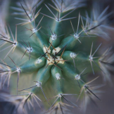 Kendra Rubalcaba | Phoenix
