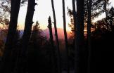 Linnea Maxwell | Flagstaff