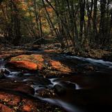 Randy Gibson | Beaver Creek