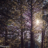Shauna Evans | Flagstaff