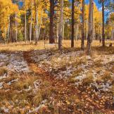 Tom Corey | Arizona Trail
