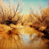 Zina Michael | Near Phoenix