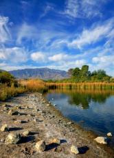Chad Harris Roper Lake