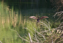 Donna Drake   Hassayampa River