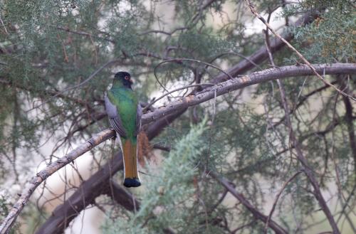 Courtesy of The Cornell Lab of Ornithology