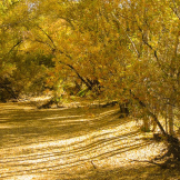 Focus On Nature Photography | Near Watson Lake