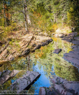Focus On Nature Photography   West Fork