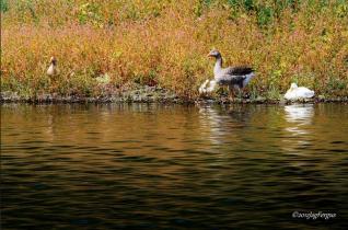 Jag Fergus | Lynx Lake