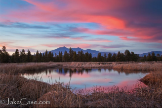 Jake Case‎ | Kachina Wetlands