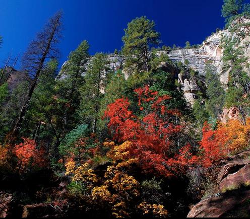 Joel Rivera   Oak Creek Canyon