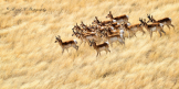 Robert Rinsem | Prescott Valley