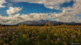 Ron Pelton Jr | Flagstaff