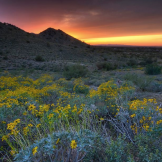 Sue Cullumber‎ | Queen Creek