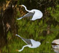 Susan Beebee | Agua Caliente Park