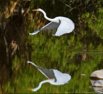 Susan Beebee   Agua Caliente Park