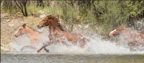 Susie Westervelt | Salt River