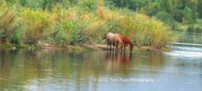 Tam Ryan   Salt River
