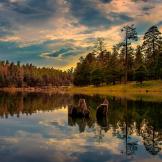 DNphotography Spasovici   Woods Canyon Lake