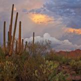 Heavenly Images by Debbie Angel   Saguaro NP West