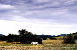Jag Fergus | Near Peeples Valley