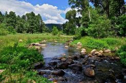 Jerry Clifton   Canyon Creek