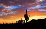 Joel Rivera | Saguaro